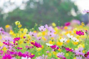 el juego de la primavera empieza